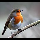 rocky robin 2 by Brett Watson Stand By Me  Ethiopia