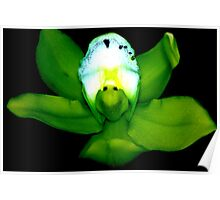 Kermie Baby: Alien Discovery: A New Perspective on Orchid Life Poster