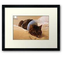 ...it'll never be on-trend... Framed Print