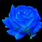 Midnight Blue by Dorothy Thomson