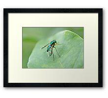 Green metallic fly on leaf Framed Print