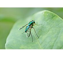Green metallic fly on leaf Photographic Print