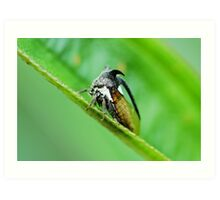 Insect with two horn Art Print