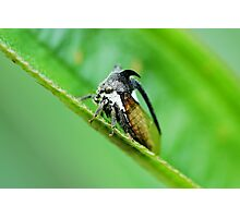 Insect with two horn Photographic Print