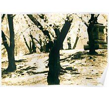 Central Park in Bloom Poster