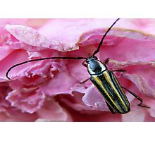 A Beetle and His Flower Photographic Print