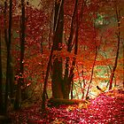 MAGIC IN THE WOODS by leonie7