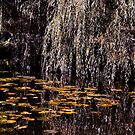 Leaves in Pond by RosiLorz