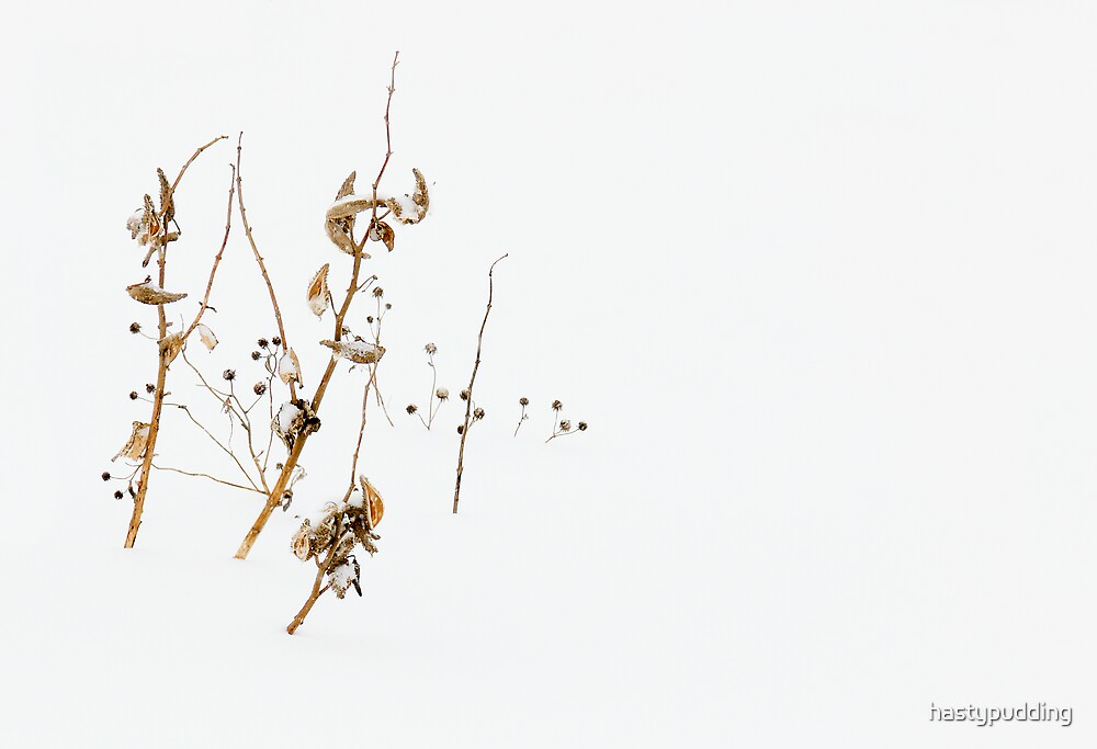 Milkweed In Winter by hastypudding