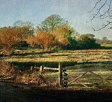 Powderham by Catherine Hamilton-Veal  ©
