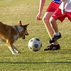 United States Naval Academy : Annapolis Soccer Dog by James Jurena