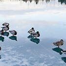 Ducks on frozen river by Stefán Kristinsson