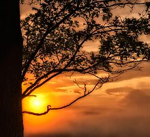 Sunset Framed with Tree  by KellyHeaton