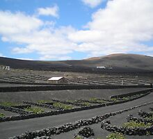 Vineyards in Lanzarote by Jane Dickson