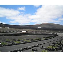 Vineyards in Lanzarote Photographic Print
