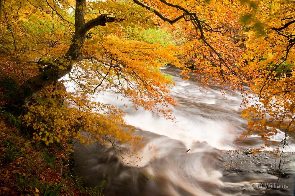 River Isla near Alyth (viewed 100 times) by Cliff Williams