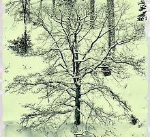 My tree by AlexThomson