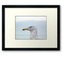 Is this so Gull a bill Framed Print