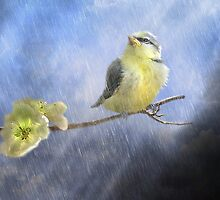 Little Sunshowers by Trudi's Images