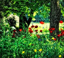 Woodland and Poppies by Karen  Betts