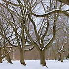 Winter Trees by SuddenJim