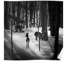 Five Deer in Snow Poster