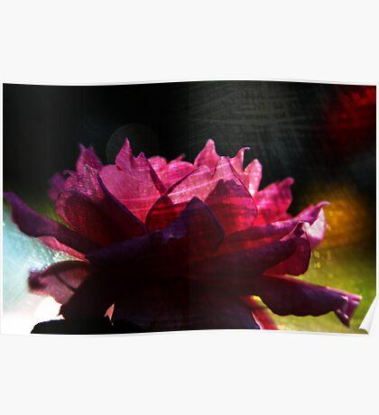 Chi Energy Flower Poster