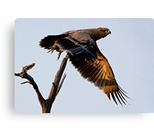 Tawny Eagle In Flight Canvas Print