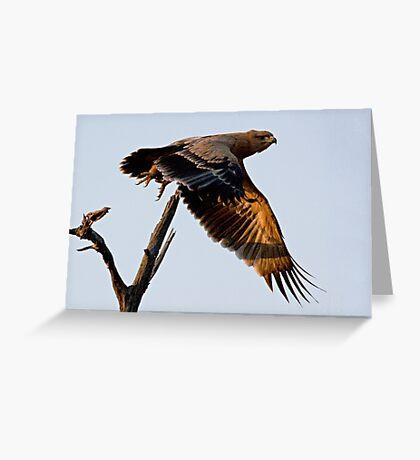 Tawny Eagle In Flight Greeting Card