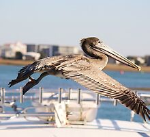 Pelican flying over the Boats by Paulette1021