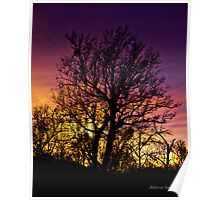 Sunset Oak - Sedona  Poster