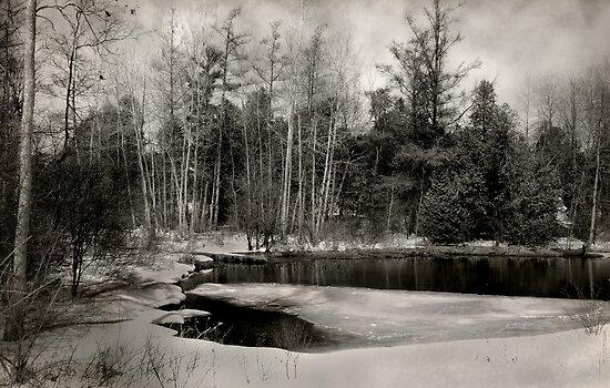 Anndale Pond by Robin Webster