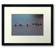 Ready!  One! Two! Three! Dunk! Framed Print