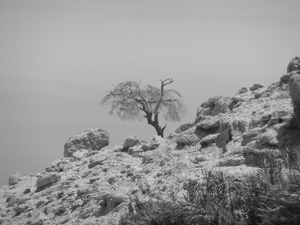 Lonesome Tree by Adam Isaacson