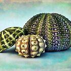 Sea Urchin Trio by DiEtte Henderson