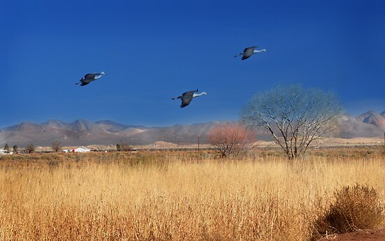 Cranes in Flight by Barbara Manis