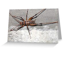 Cave Weta Greeting Card