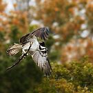 Off To The Nest by Kathy Cline