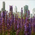 Nature vs. City by Christina McColl