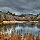 Winter Cattails By The Lake by Diana Graves Photography