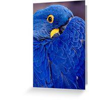 I'm Keepin An Eye On You!! Greeting Card