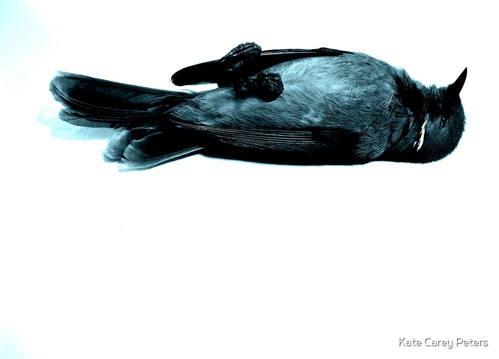 oiseaux morts 1 by Kate Carey Peters