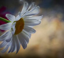 Simplicity by Margaret Goodwin