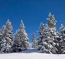 Snowy Trees by Jeanne Frasse