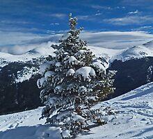 Snowy Tree by Jeanne Frasse