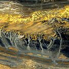 """Ghost Forest"" by Patrice Baldwin"
