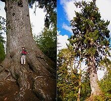 ancient roots by dedmanshootn