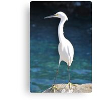 White Bird Against Blue Water Canvas Print