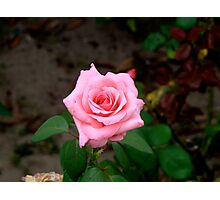 A Rose By Any Other Name.... Photographic Print