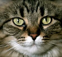 Serious Feline by Christina McColl